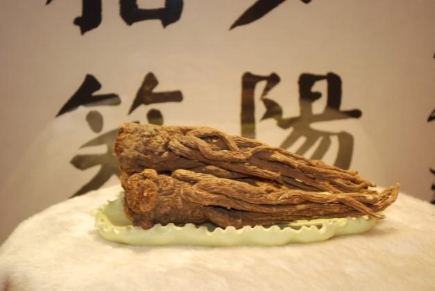 岷县当归-冬虫夏草 中国青海三江源冬虫夏草 Cordyceps sinensis